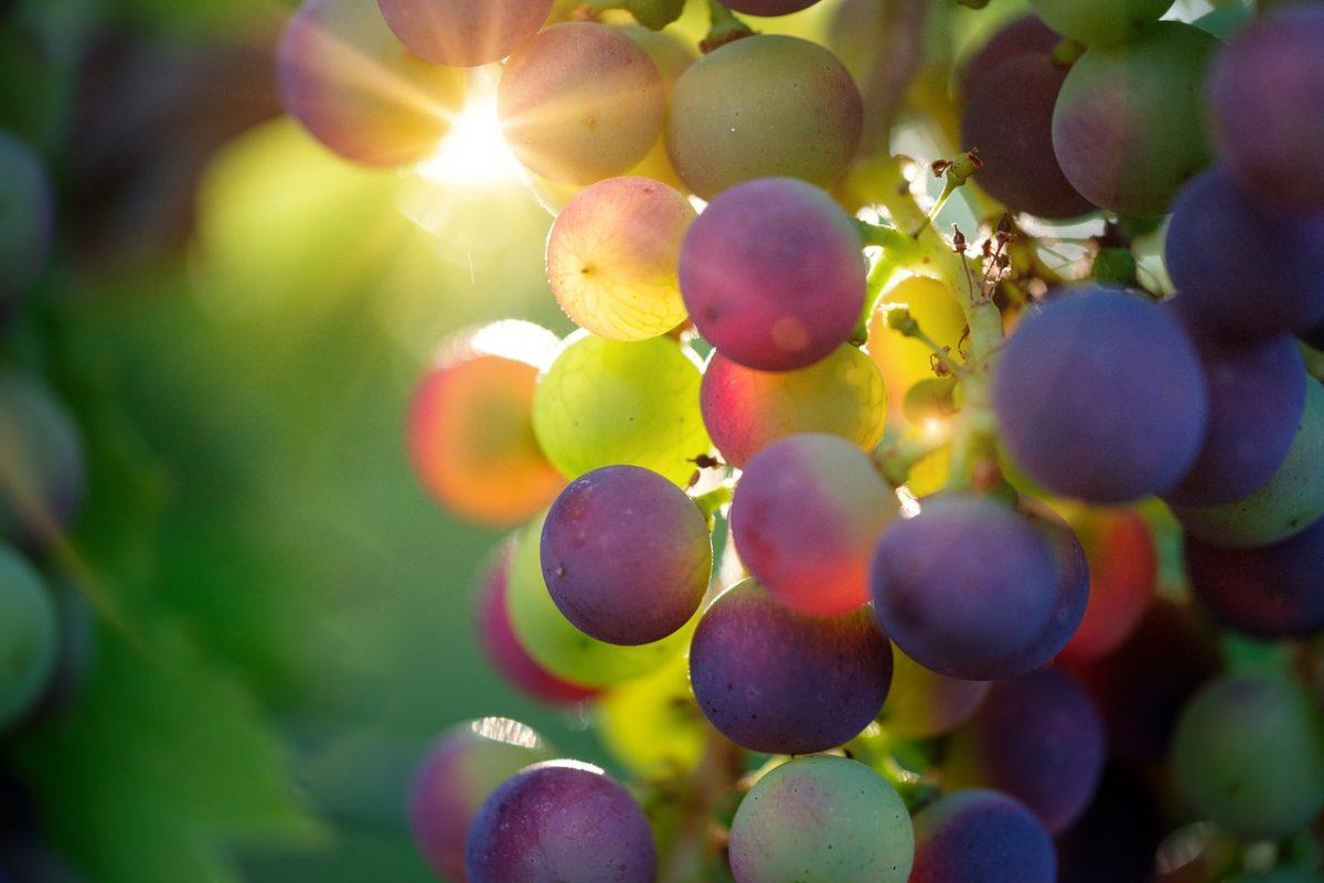 Le vin biologique: pour la santé de la planète et du consommateur